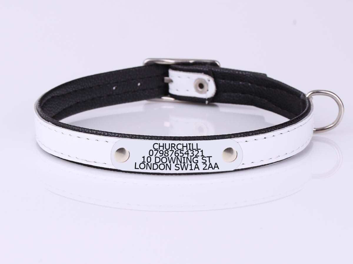 Dog Collars With Name Plate Attached